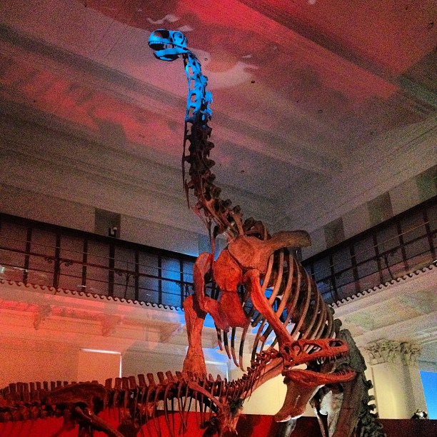Dinosaur skeletons at Australian Museum Sydney: Kids Activities Sydney