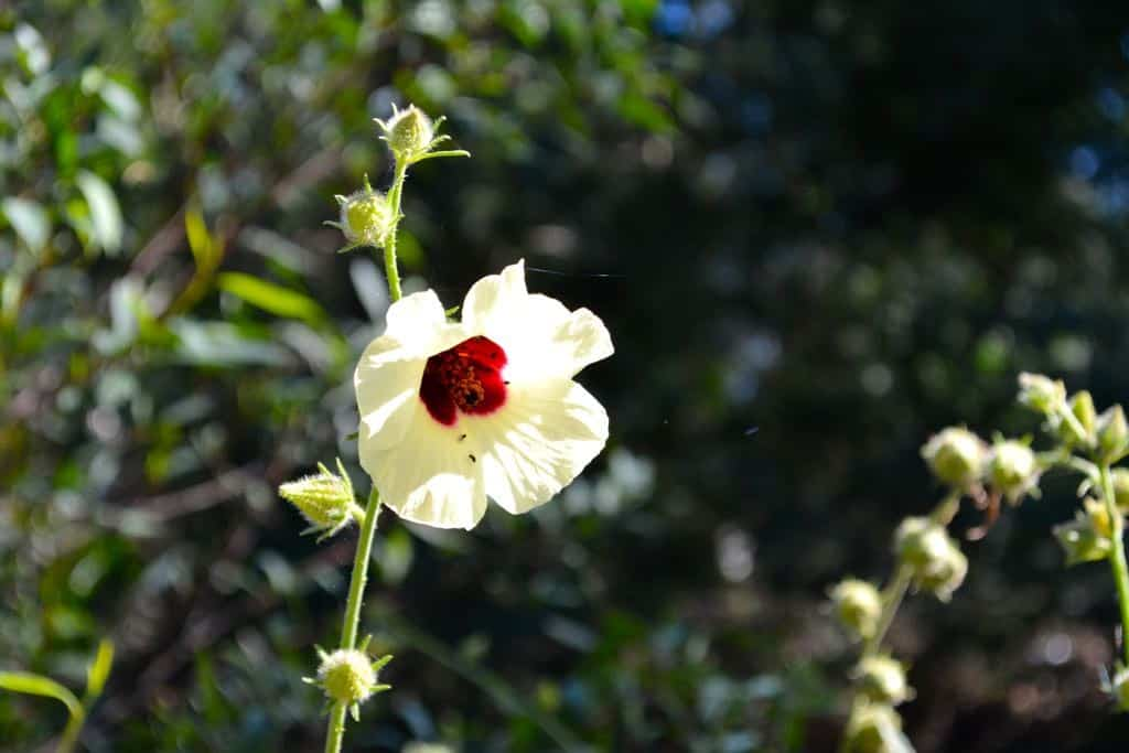 Flower on the Northern Beaches