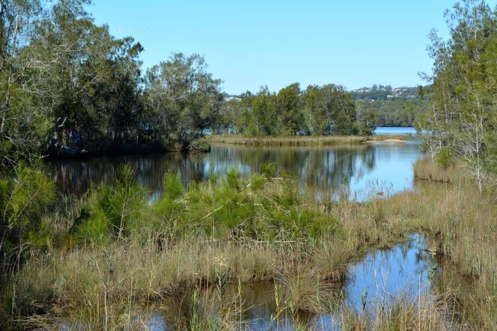The landscape is a mix of water, marsh and forest