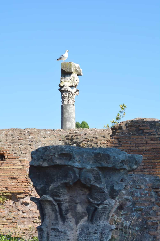 A pigeon on a column