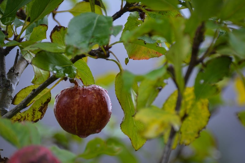 Apple in the Walled Gardens