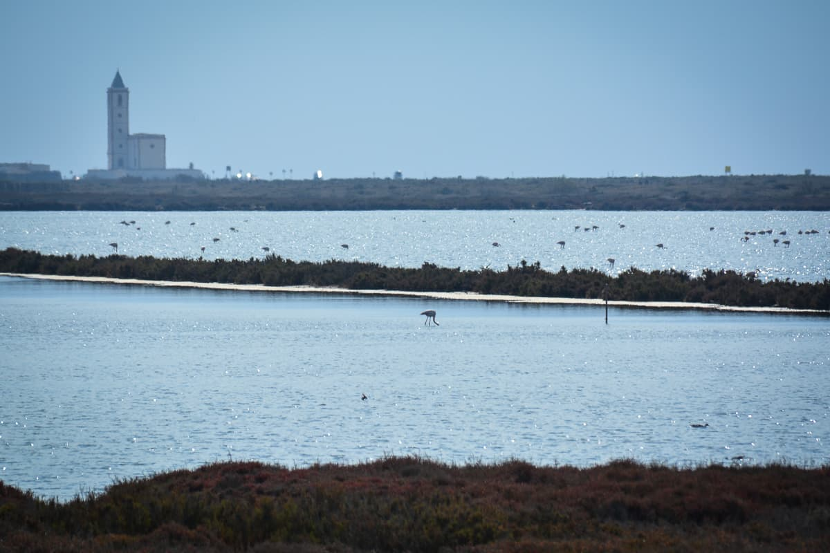 Flamingos and other water birds in the salt panes: such a serene picture in Cabo de Gata.