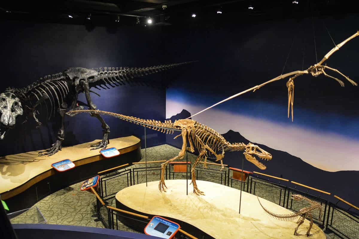 Burpee Natural History Museum is great for kids who love to learn more about the ongoing investigation in dinosaurs.