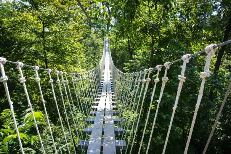 The suspended bridge is part of the zip lining experience at Long Hollows. If you are scared of heights, you may find this part slightly challenging although it is very safe.